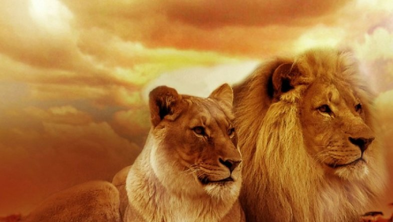 Dr. Jason Carthen: Move from the Mindset of a Lamb to a Lion in Sales